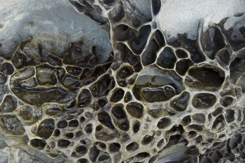 Honeycomb weathering; Clayton Beach